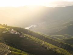Touring Douro Wine Country - copy - copy - copy